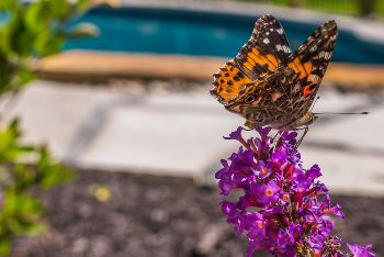Increase biodiversity by attracting pollinators