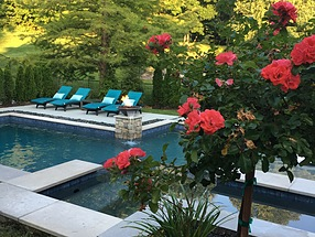 landscape design, st. louis landscape, pool, rose tree